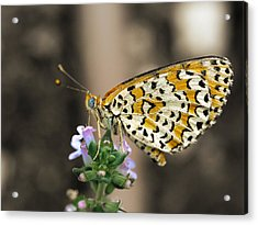 Acrylic Print featuring the photograph Like A Flying Tiger by Meir Ezrachi