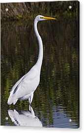 Like A Great Egret Monument Acrylic Print by John M Bailey