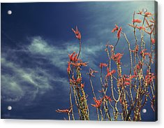 Like Flying Amongst The Clouds Acrylic Print by Laurie Search