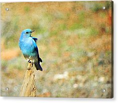 Lil Bird Of Happiness Acrylic Print by Leah Moore