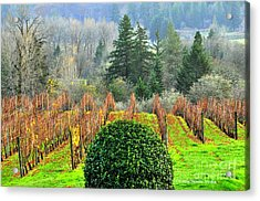 Acrylic Print featuring the photograph Li'l Vineyard by Tonia Noelle