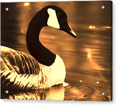 Lila Goose The Pond Queen Sepia Acrylic Print by Lesa Fine