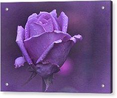 Lila Rose Acrylic Print