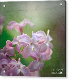 Lilac Dreaming  Acrylic Print