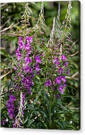 Acrylic Print featuring the photograph Lilac Flower by Leif Sohlman