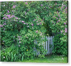 Acrylic Print featuring the photograph Lilac Season by Alan L Graham