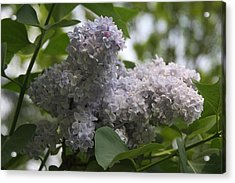 Acrylic Print featuring the photograph Lilac by Vadim Levin