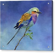 Lilacbreasted Roller Acrylic Print by David Stribbling