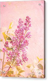 Lilacs In Pink Acrylic Print by Kay Pickens