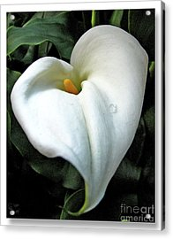 Acrylic Print featuring the photograph Lilian Heart by Chris Anderson