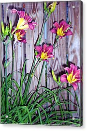 Lilies Against The Wooden Fence Acrylic Print by Danielle  Parent