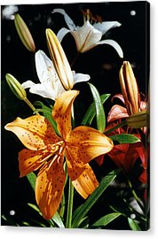 Lilies Assorted Colors Acrylic Print by Robert Lozen