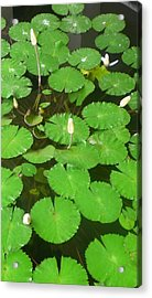 Lilies In The Pond Acrylic Print by Jack Edson Adams