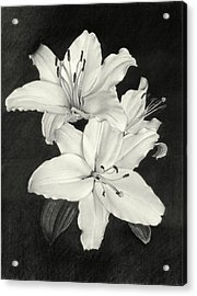 Lilies Acrylic Print by Nicola Butt