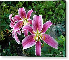 Acrylic Print featuring the photograph Lilies Of The Field by Lingfai Leung