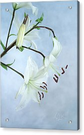 Lilies On Blue Acrylic Print by Louise Kumpf