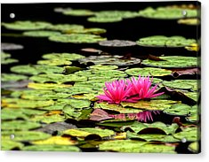 Lilies On Lake Hope Acrylic Print by Dick Wood
