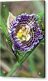 Acrylic Print featuring the photograph Lilikoi Flower by Dan McManus