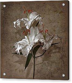 Acrylic Print featuring the photograph Lilium Euratum #01 by Richard Wiggins