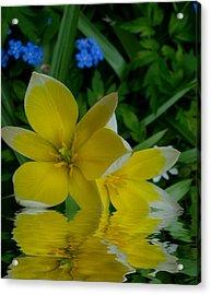 Lilium Of Gold Acrylic Print by Pepita Selles