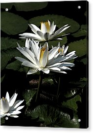 Acrylic Print featuring the photograph Lillies by John Freidenberg
