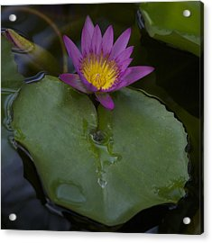 Lilly And Lotus Acrylic Print by Brian Governale