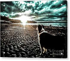 Lilly And The Sun Acrylic Print