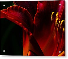 Lilly Edge Acrylic Print by Camille Lopez