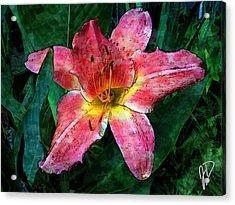 Lilly Of The Rain Acrylic Print