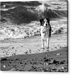 Lilly On The Beach Acrylic Print