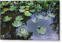 Lilly Pad Reflections Acrylic Print