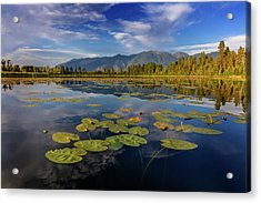 Lilly Pads And Swan Range Reflects Acrylic Print