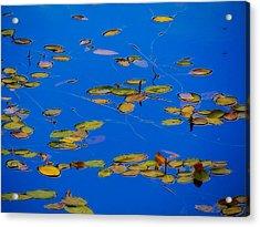 Lilly Pads Acrylic Print by Dennis Bucklin