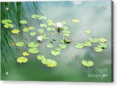 Acrylic Print featuring the photograph Lilly Pads by Erika Weber
