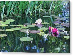 Lilly Pond At Mission San Juan Capistrano Acrylic Print by Debby Pueschel