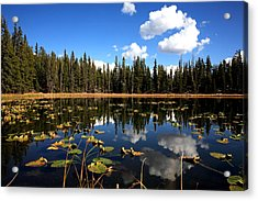 Lilly Pond Acrylic Print