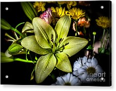 Lily Acrylic Print by Adrian Evans