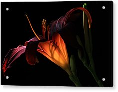 Acrylic Print featuring the photograph Lily Ambiance by Donna Kennedy
