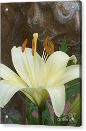 Lily And Rock Acrylic Print by Wide Awake Arts