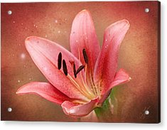 Acrylic Print featuring the photograph Lily by Ann Lauwers