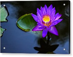 Acrylic Print featuring the photograph Lily Awakens by Dave Files