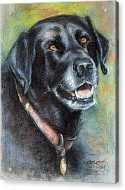 Lily- Black Labrador Retriever Acrylic Print by Sciandra