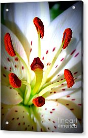 Lily Center Acrylic Print by Patti Whitten
