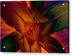 Acrylic Print featuring the photograph Lily Colors by WB Johnston