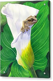 Lily Dipping Acrylic Print by Catherine G McElroy