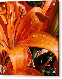 Acrylic Print featuring the photograph Lily Drops by Kerri Mortenson