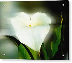 Lily Faux Watercolor Acrylic Print by Frank Bright