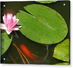 Lily Flower Acrylic Print