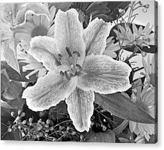 Lily Acrylic Print by Frank Winters