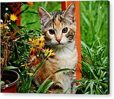 Acrylic Print featuring the photograph Lily Garden Cat by VLee Watson